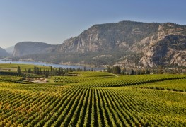 Découvrez les meilleures régions vinicoles au Canada