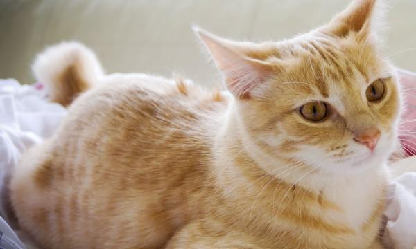 4 conseils pour le gardiennage de chats