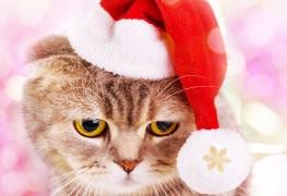 4 conseils pour organiser une fête de Noël amusante pour votre animal