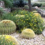Comment créerun beau jardin dans un sol sec