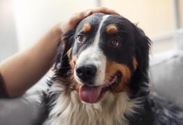 5 conseils si vous devez laisser votre chien seul à la maison