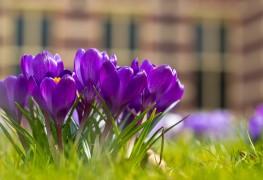 Guide pratique pour tout savoir sur les bulbes de fleurs