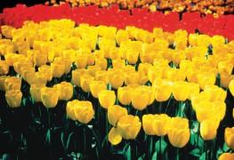10 fleurs du printemps qui s'invitent chez votre fleuriste