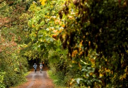 6 escapades d'automne amusantes près de Vancouver