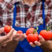 De la ferme au marché: un guide des meilleurs marchés estivaux de Vancouver