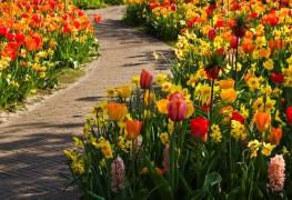 5 conseils pour planter des bulbes de fleurs
