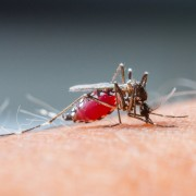 Comment prévenir et traiter le virus du Niloccidental