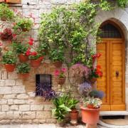 Votre guide pour fleurs annuelles
