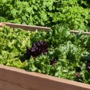 10 idées pour planter des laitues et d'autres légumes verts
