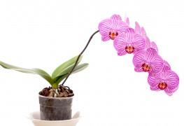 Cultiver des plants d'intérieur et d'extérieur: les palmiers et les orchidées