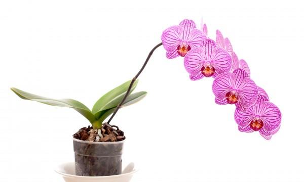 cultiver des plants d 39 int rieur et d 39 ext rieur les palmiers et les orchid es trucs pratiques. Black Bedroom Furniture Sets. Home Design Ideas