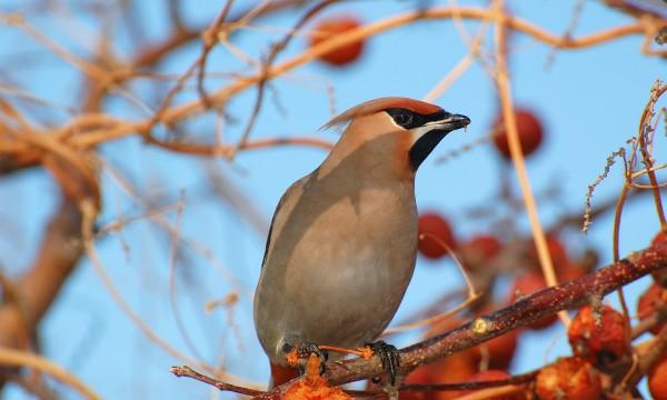 9 astuces pour tenir les oiseaux éloignés de votre jardin