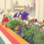 11 trucs pour des jardinières de fenêtre magnifiques