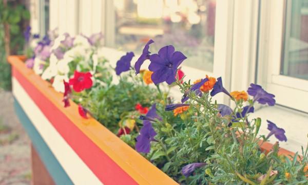11 trucs pour des jardini res de fen tre magnifiques trucs pratiques. Black Bedroom Furniture Sets. Home Design Ideas