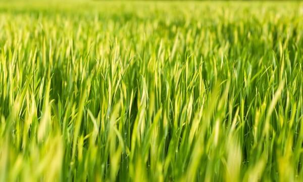 Conseils d'expert pour préparer votre pelouse àl'hiver