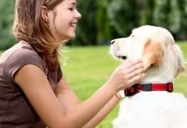 Votre chien est-il diabétique?