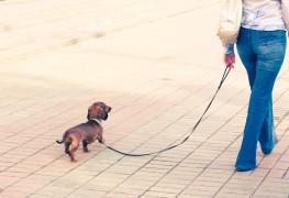 Mon chien souffre-t-il d'incontinence urinaire?