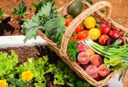 14 façons de débarrasser votre jardin biologique des nuisibles et des maladies