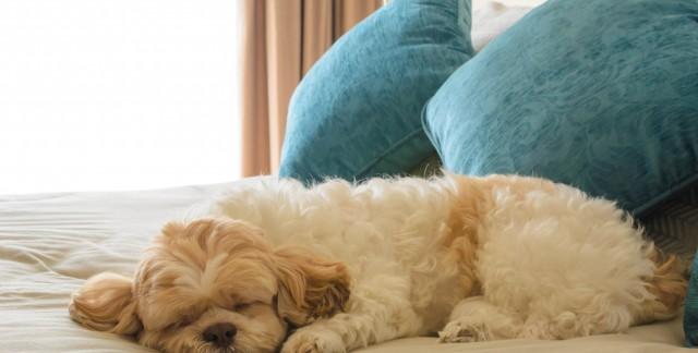 Bienvenu à tout le monde: les hôtels qui acceptent les animaux à travers le Canada