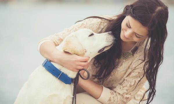 4 signes indiquantquevotre animal de compagnie souffre d'arthrite