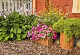 Protégez vos plantes des tétranyques et des aleurodes