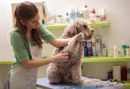 12 questions importantes à poser lorsque vous appelez un toiletteur pour animaux