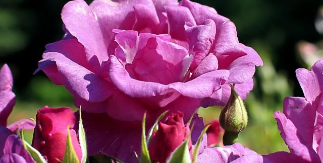 Planterun jardin de fleurscomestibles: un petitguide