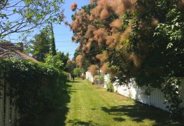 5 ruelles vertes inspirantes de Montréal