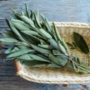 Sauge: 4 utilisations des herbes aromatiques polyvalentes