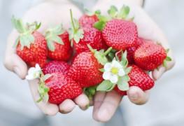 10 aliments biologiques que vous devriez acheter