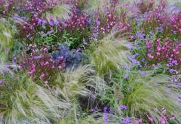 8 conseils pour choisir et planter des graminées ornementales