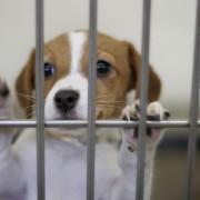 Avez-vous ce qu'il faut pour adopter un chien