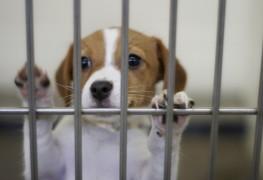 Avez-vous ce qu'il faut pour adopter un chien?