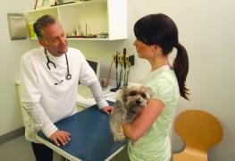 Infections d'oreilles chez le chien : une visite chez le vétérinaire s'impose!
