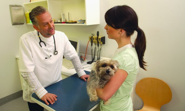 Infections d'oreilles chez le chien: une visite chez le vétérinaire s'impose!