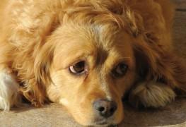 Votre chien a la diarrhée? Consultez un vétérinaire