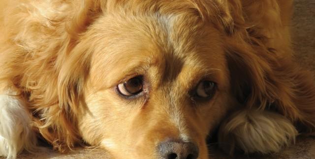 Votre chien a la diarrhée? Consultez un vétérinaire!