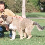 Dressage au rappel: comment faire revenir votre chien