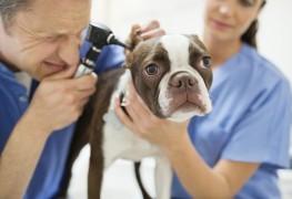 Que faire lorsque son chien a des rougeurs cutanées?