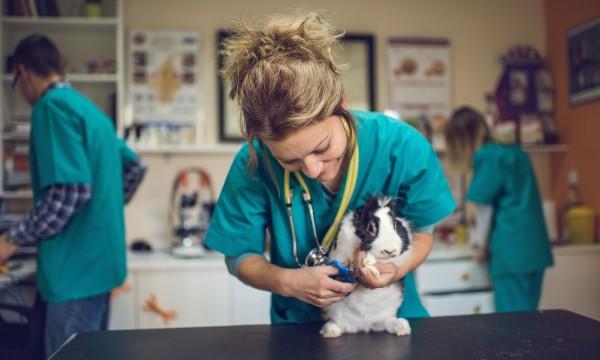 11 questions importantes à poser lorsque vous appelez un vétérinaire