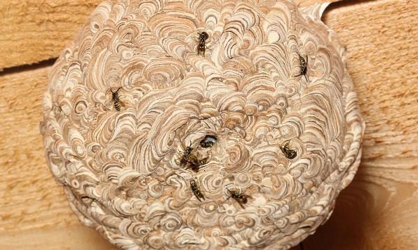 7 conseils pour se d barrasser d 39 un nid de gu pes en toute s curit trucs pratiques. Black Bedroom Furniture Sets. Home Design Ideas