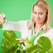 Conseils simples pour faire pousser vos plantes d'intérieur
