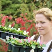 Tout ce que vous devez savoir sur les fleurs annuelles