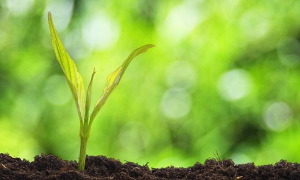 sol alcalin plante