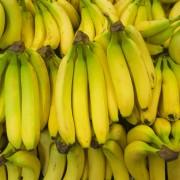 Étapes simples pour faire pousserdes bananes et des bleuets