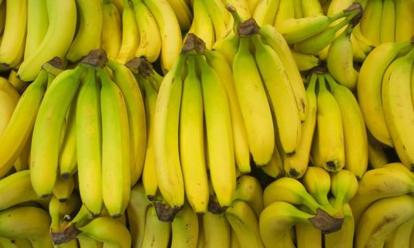 u00c9tapes simples pour faire pousser des bananes et des bleuets
