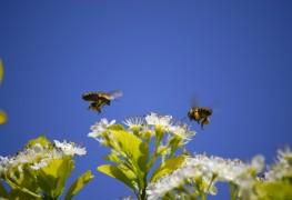 Comment savoir si une piqûre d'insecte est toxique