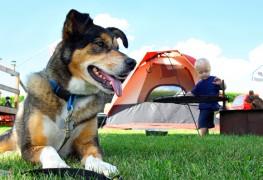 En route vers le camping avec votre chien
