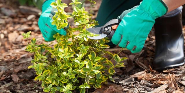 6 outils de jardinage essentiels