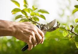 L'élagage : une coupe préventive pour vos arbres